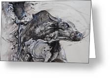 Bull Rider Greeting Card by Bob Graham