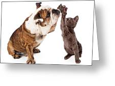 Bulldog And Kitten High Five  Greeting Card by Susan  Schmitz