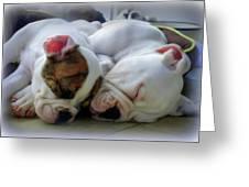Bulldog Bliss Greeting Card by Karen Wiles