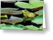 Bullfrog Greeting Card by Jim Zipp