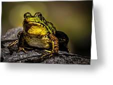 Bullfrog Watching Greeting Card by Bob Orsillo