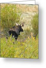Bullwinkle Butt Greeting Card by Feva  Fotos