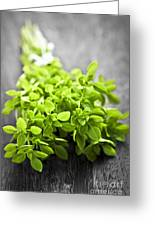 Bunch Of Fresh Oregano Greeting Card by Elena Elisseeva