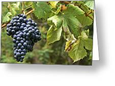 Bunch Of Grapes Greeting Card by Paulo Goncalves