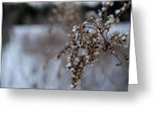 Burs In The Winter  Greeting Card by Shaun Maclellan