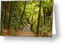 Bush Pathway Waikato New Zealand Greeting Card by Colin and Linda McKie