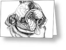Buster Greeting Card by Catherine Garneau