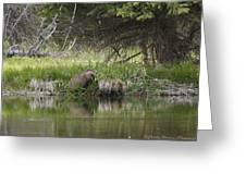 Busy Beaver Greeting Card by Charles Warren