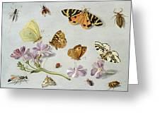Butterflies Greeting Card by Jan Van Kessel