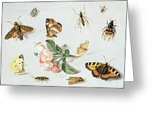 Butterflies Moths And Other Insects With A Sprig Of Apple Blossom Greeting Card by Jan Van Kessel