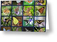 Butterflies Squares Collage Greeting Card by Carol Groenen