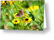 Butterfly And Yellow Flowers Greeting Card by Carlee Ojeda
