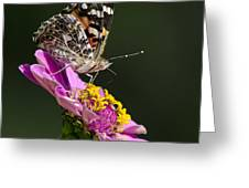 Butterfly Blossom Greeting Card by Christina Rollo