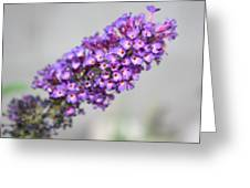 Butterfly Bush Up Close Greeting Card by Jo Anne Neely Gomez
