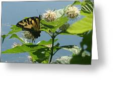 Butterfly By The Water Greeting Card by Stephen Melcher