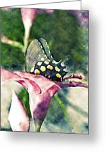 Butterfly In Flower Greeting Card by Susan Leggett