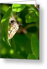 Butterfly Larvae Greeting Card by Andrew Gaylor