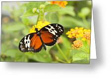 Butterfly Wings Greeting Card by Anne Gilbert