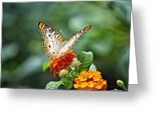 Butterfly Wings Of Sun 2 Greeting Card by Thomas Woolworth