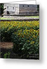 Buttonwood Greeting Card by Michelle Welles