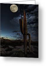 By The Light Of The Moon Greeting Card by Saija  Lehtonen