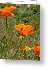 Ca Poppies And Bee Greeting Card by Gracia  Molloy