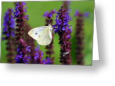Cabbage White Butterfly Greeting Card by Christina Rollo