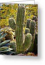 Cacti Habitat Greeting Card by Kelley King