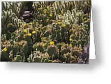 Cactus Carpet Greeting Card by David Rizzo