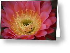 Cactus Flower Greeting Card by Bonita Hensley