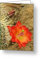Cactus Flower Bright Greeting Card by Feva  Fotos