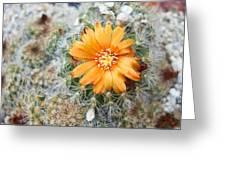Cactus Flower Greeting Card by Marina Oliveira