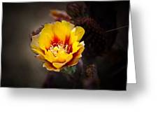 Cactus Flower Greeting Card by Swift Family