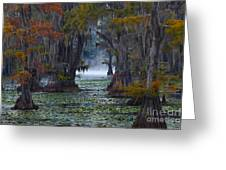 Caddo Lake Morning Greeting Card by Snow White