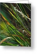 Calamagrostis Lines Greeting Card by Rebecca Sherman