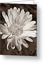 Calendula Greeting Card by Chris Berry