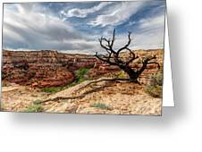 Calf Creek Greeting Card by Dustin  LeFevre