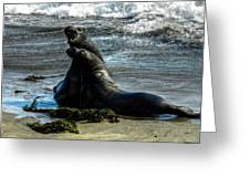 California - Elephant Seals Of Big Sur 006 Greeting Card by Lance Vaughn