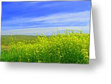California In Spring Greeting Card by Rima Biswas