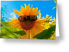 California Sunflower Greeting Card by Bill Gallagher