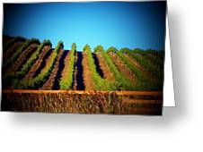California Vineyard Greeting Card by Joyce Kimble Smith