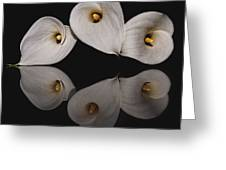 Calla Circle D4423 Greeting Card by Wes and Dotty Weber