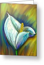 Calla Lily In The Morning Light Greeting Card by Angela A Stanton