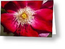 Camellia Greeting Card by Carolyn Marshall