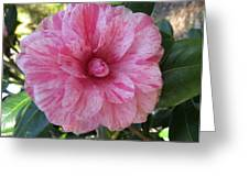 Camellia Japonica II Greeting Card by Zina Stromberg