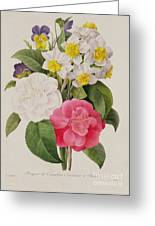 Camellias Narcissus And Pansies Greeting Card by Pierre Joseph Redoute