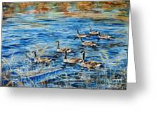 Canada Geese Greeting Card by Zaira Dzhaubaeva