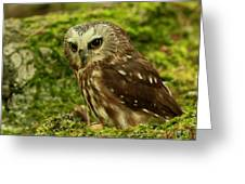 Canada's Smallest Owl - Saw Whet Owl Greeting Card by Inspired Nature Photography Fine Art Photography