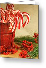 Candycanes With Berries And Pine Greeting Card by Sandra Cunningham