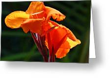 Canna In Sunlight Greeting Card by Margaret Saheed